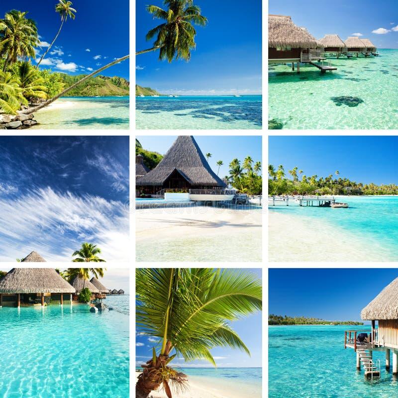 Collage delle immagini tropicali dal moorea e dalla Tahiti immagini stock