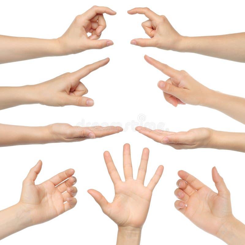 Collage delle mani della donna fotografia stock libera da diritti