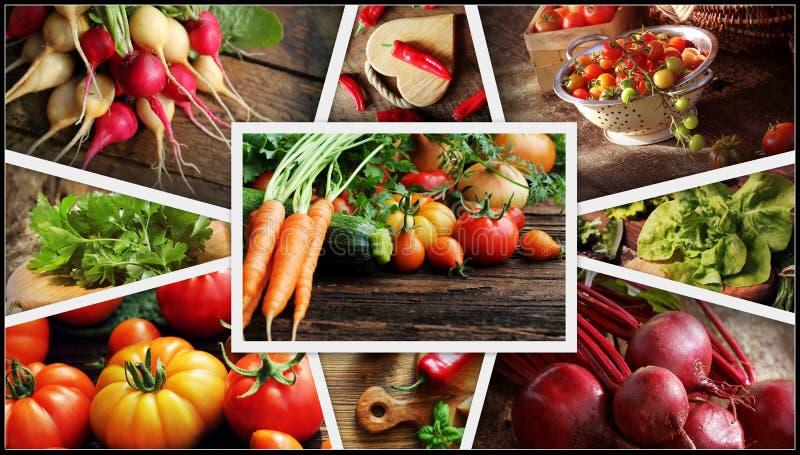 Collage delle verdure - prodotti dell'orto Concetto sano di cibo Priorità bassa di giardinaggio fotografia stock