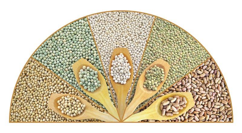 Collage der getrockneten Linsen, Erbsen, Soyabohnen, Bohnen lizenzfreie stockfotos
