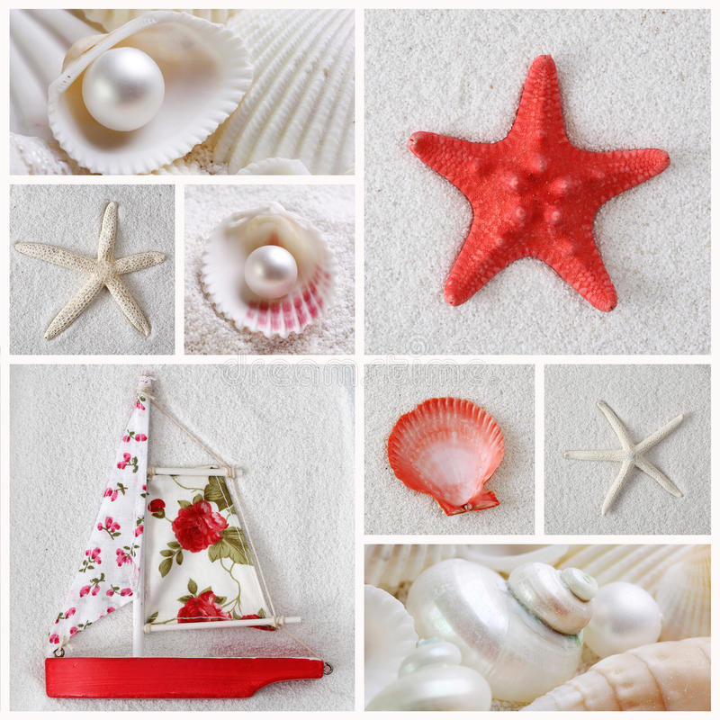 Collage des étoiles de mer image libre de droits