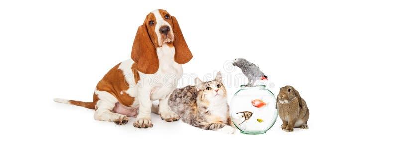 Collage des animaux familiers domestiques ensemble photo libre de droits