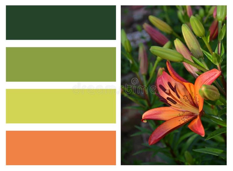 Collage des lis oranges et des rectangles colorés illustration de vecteur
