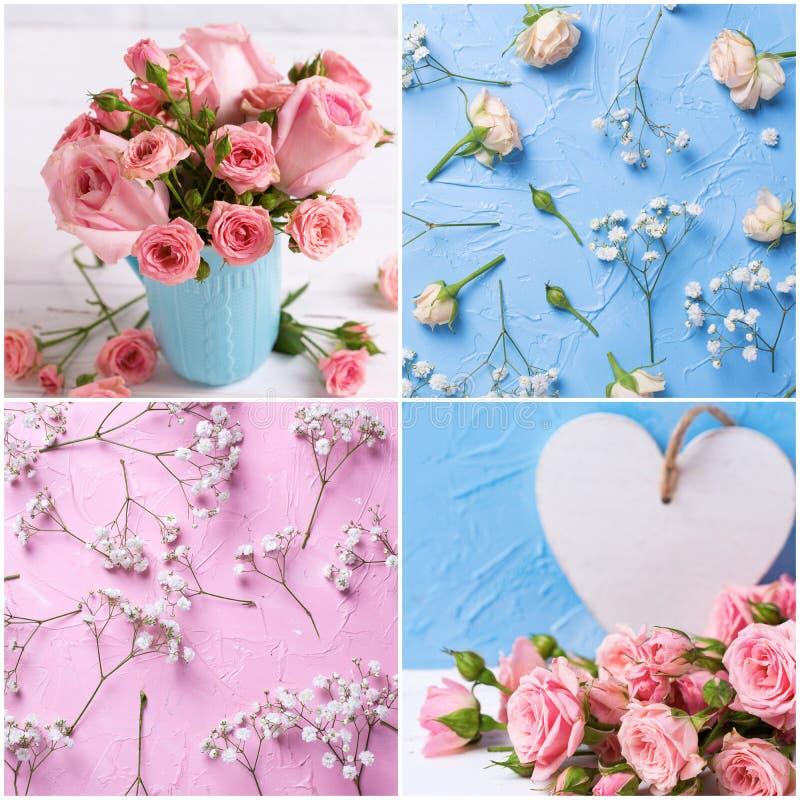 Collage des photos avec des fleurs de roses dans le rose et les couleurs bleu-clair images stock