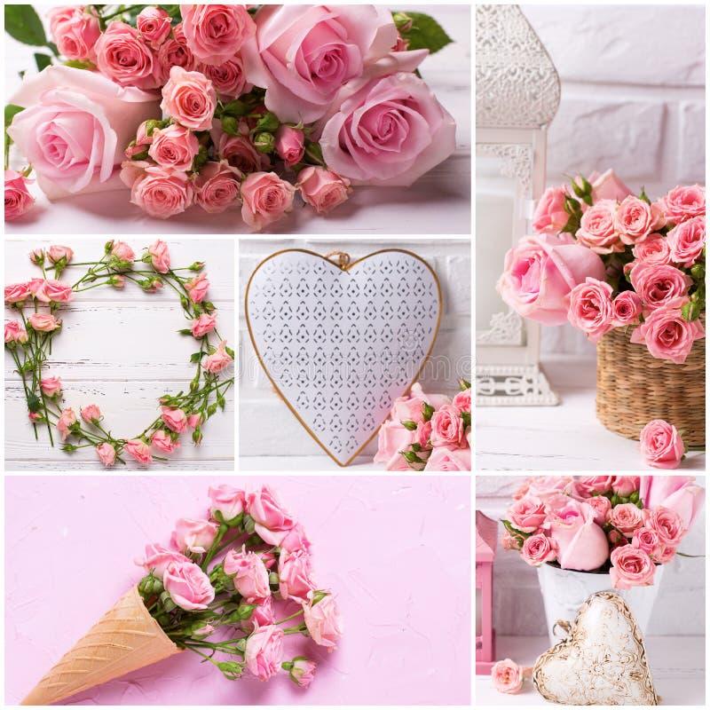 Collage des photos des fleurs roses tendres de roses et décoratif photographie stock libre de droits
