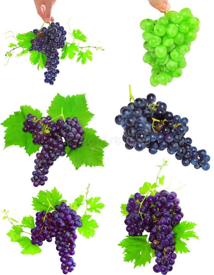 Collage des raisins avec le feuillage. D'isolement photos stock