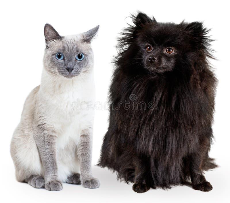 Collage des schwarzen deutschen Spitz und der thailändischen Katze des Blaupunktes stockfotografie