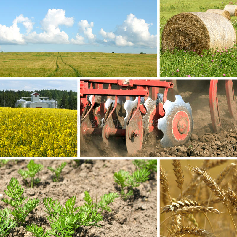 Collage di agricoltura immagine stock libera da diritti