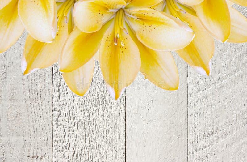 Collage di bei fiori gialli del giglio su un fondo di legno grigio con lo spazio della copia Carta di estate di festa immagine stock libera da diritti