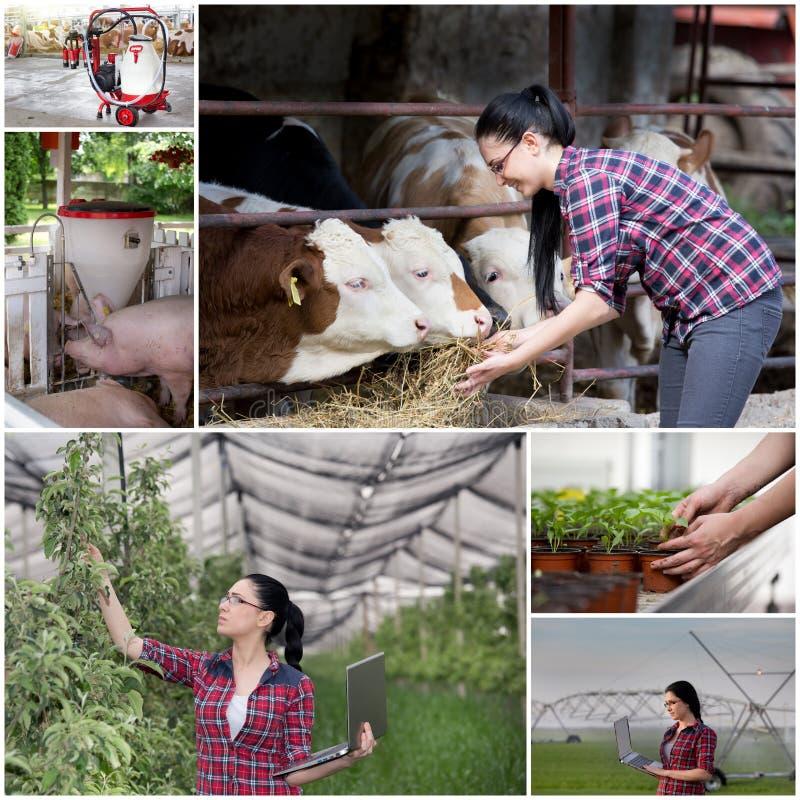 Collage di industria agricola immagine stock libera da diritti