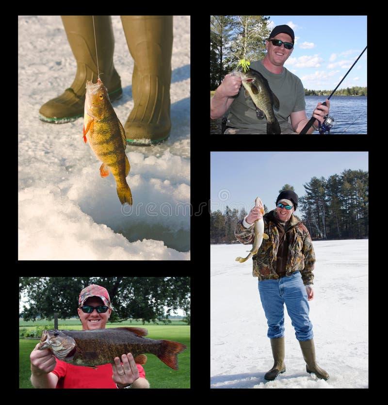 Collage di pesca immagini stock
