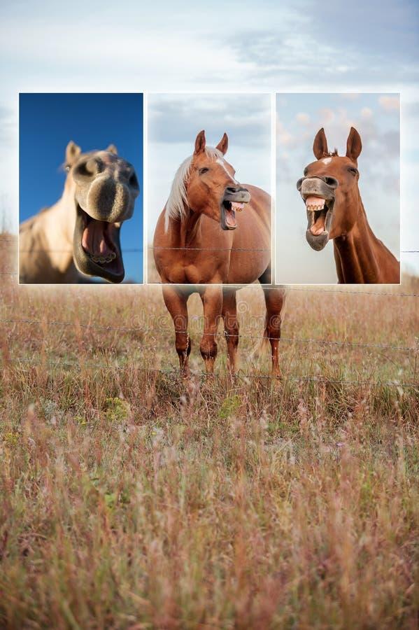 Collage di risata del cavallo fotografia stock libera da diritti