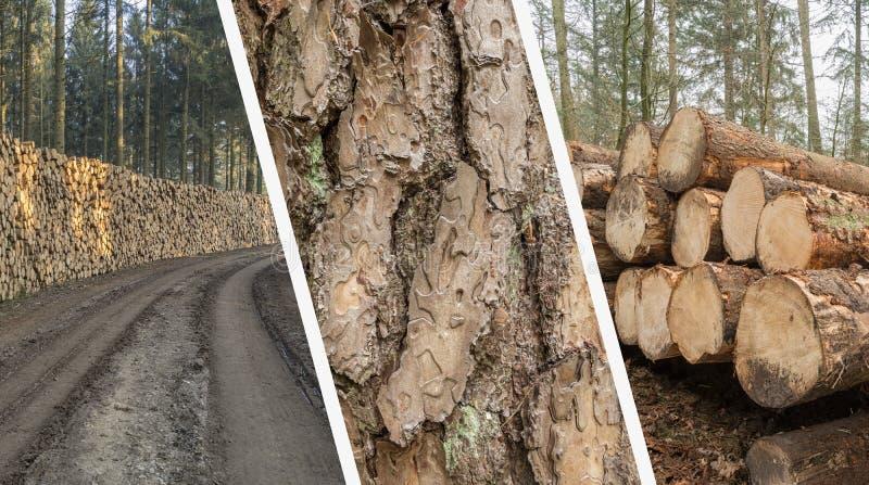 Collage di silvicoltura - industria del legname - tagli ed impilato l'albero Trun immagini stock libere da diritti
