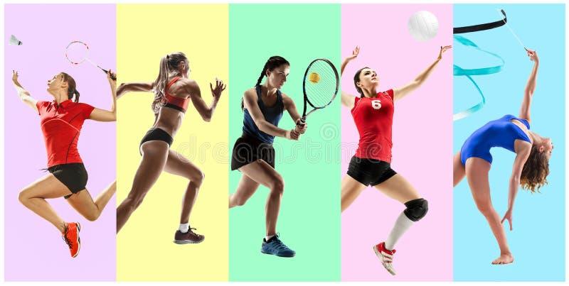 Collage di sport circa gli atleti femminili o i giocatori Il tennis, funzionamento, volano, ginnastica ritmica, pallavolo fotografia stock libera da diritti