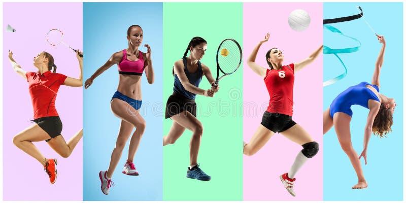 Collage di sport circa gli atleti femminili o i giocatori Il tennis, funzionamento, volano, ginnastica ritmica, pallavolo fotografia stock