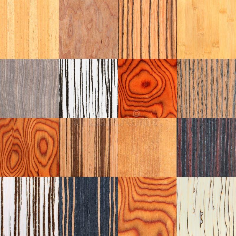 Collage di struttura di legno naturale insolita, backgroun dell'impiallacciatura dell'albero immagini stock libere da diritti
