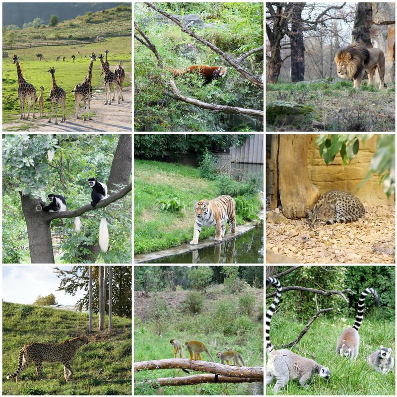 Collage of different animals stock images