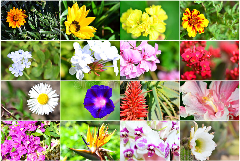 Collage of different beautiful colorful flowers. close-up stock images