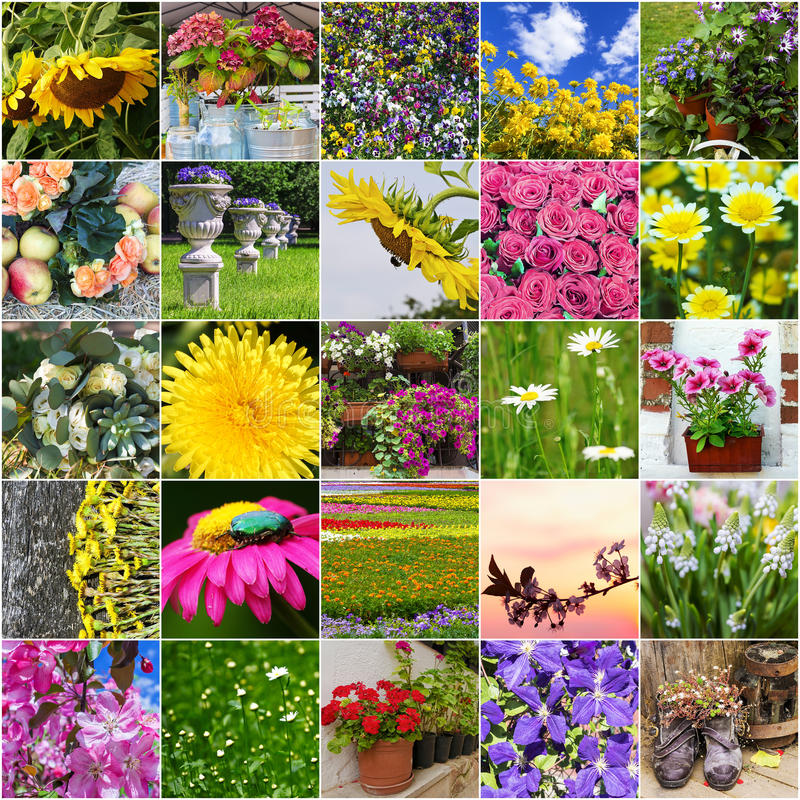 Collage of different flowers blooming royalty free stock photo