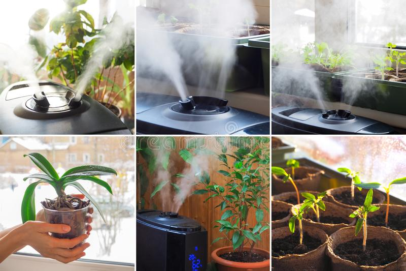Collage from different pictures of humidification for cultivation of flowers. The steam from the air humidifier in the room royalty free stock photo