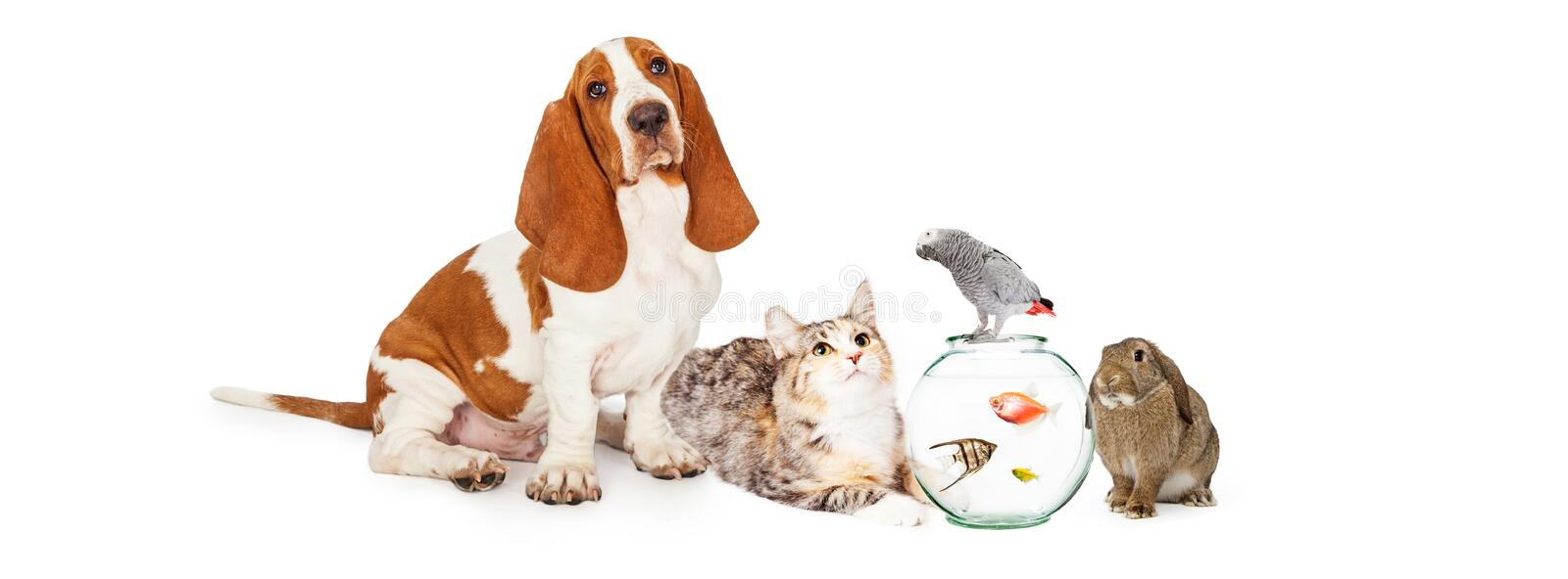 Collage of Domestic Pets Together. Group of domestic pets together including a dog, cat, fish, bird and bunny royalty free stock photo