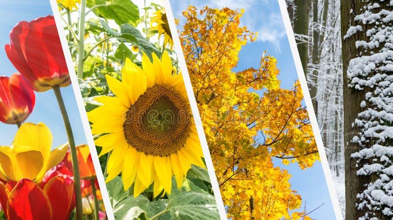 Collage för fyra säsonger - vår, sommar, höst, vinter royaltyfri foto