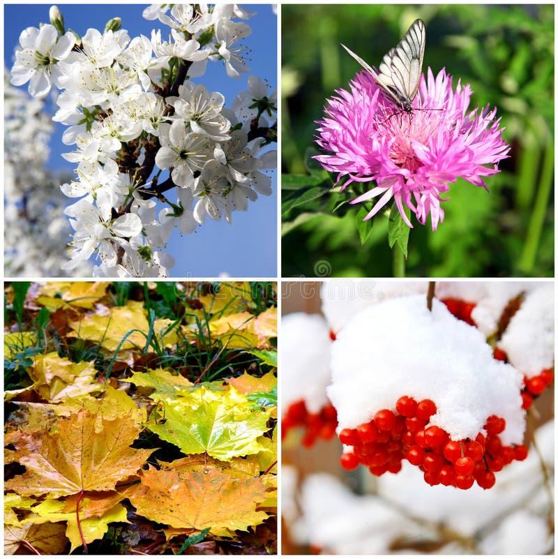 Collage för fyra säsonger - vår, sommar, höst, vinter arkivfoto