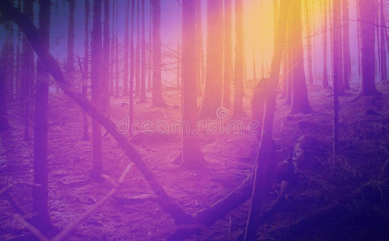 Collage fantasy forest photo background stock image