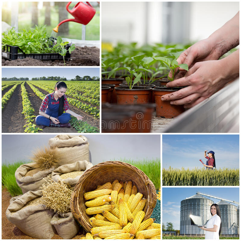 Collage of farming images stock photos