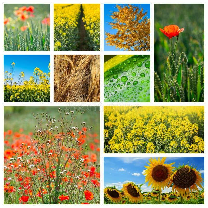 Collage fatto delle foto circa agricoltura immagine stock