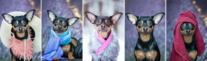 Collage fem foto av hunden i olika bilder Hund i a till arkivfoton