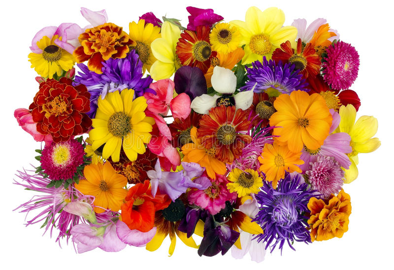 Collage floral d'août de chaos image stock