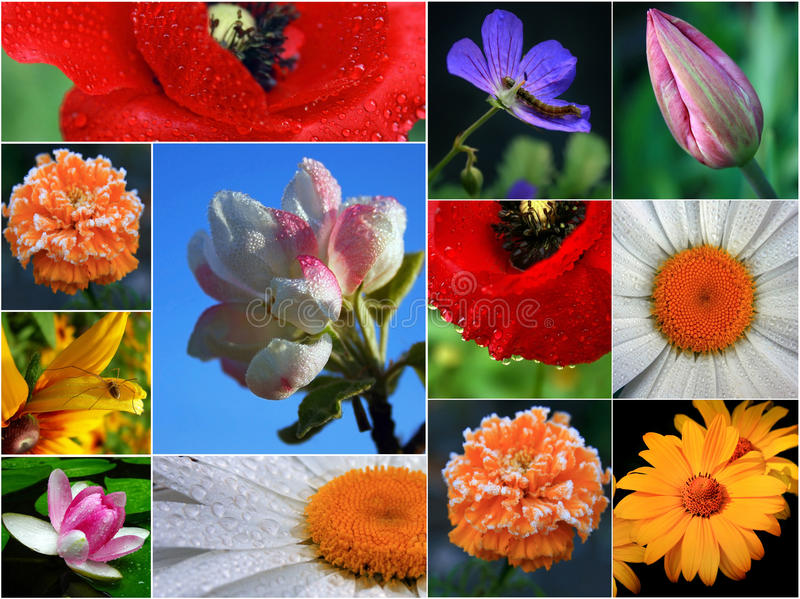 Collage Of Flowers Royalty Free Stock Photos