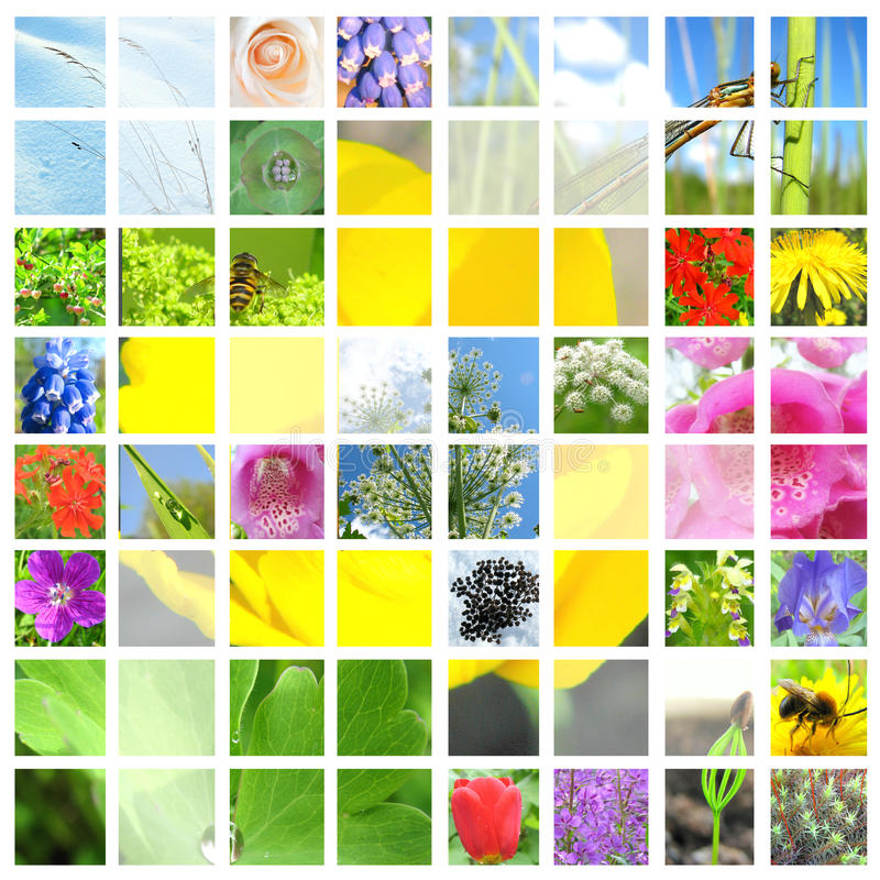 Download Collage Of Flowers And Herbals Stock Photo - Image: 16799334