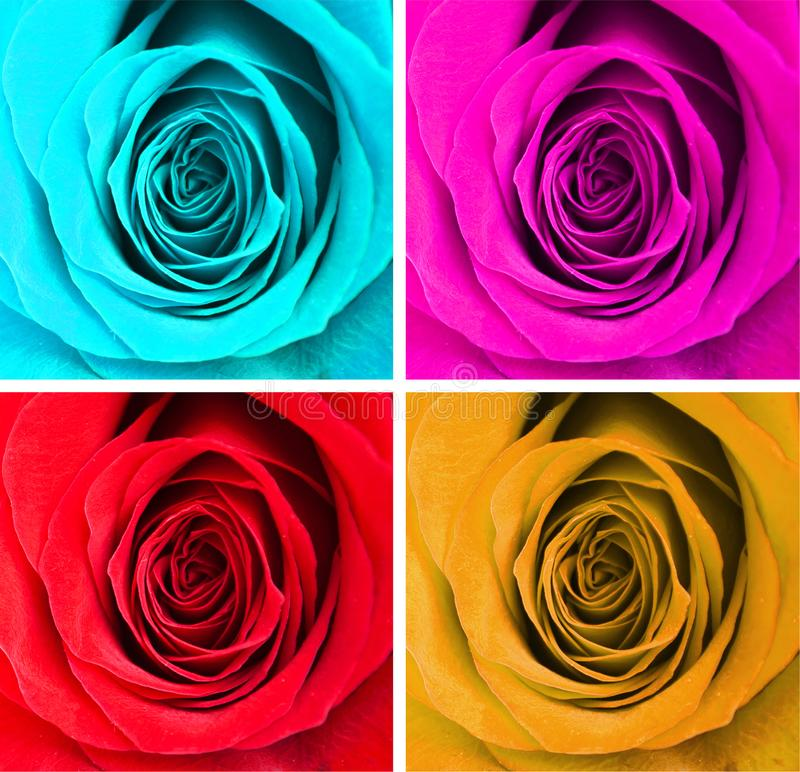 Collage of four colorful roses stock image