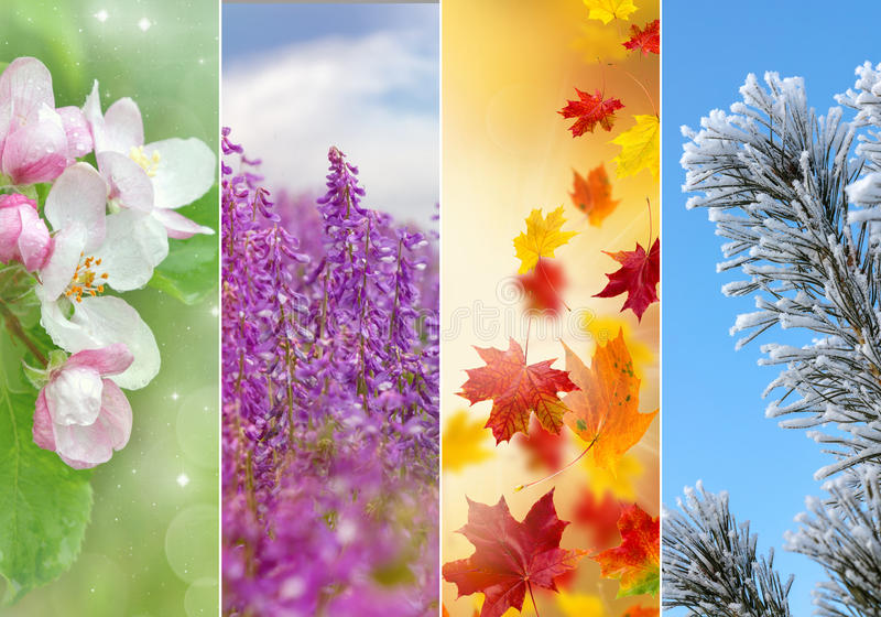 Collage of four seasons royalty free stock photos
