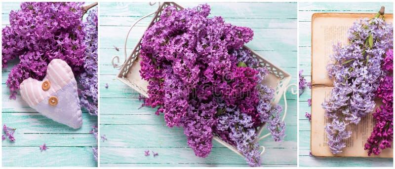 Collage från foto med den nya lilan på turkosträbackgr fotografering för bildbyråer