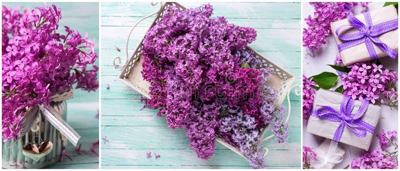 Collage från foto med den nya lilan på turkosträbackgr royaltyfri bild