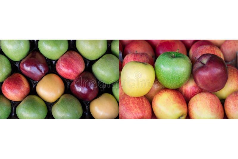 Collage från två foto av fyra olika mogna äpplen skriver royaltyfria bilder