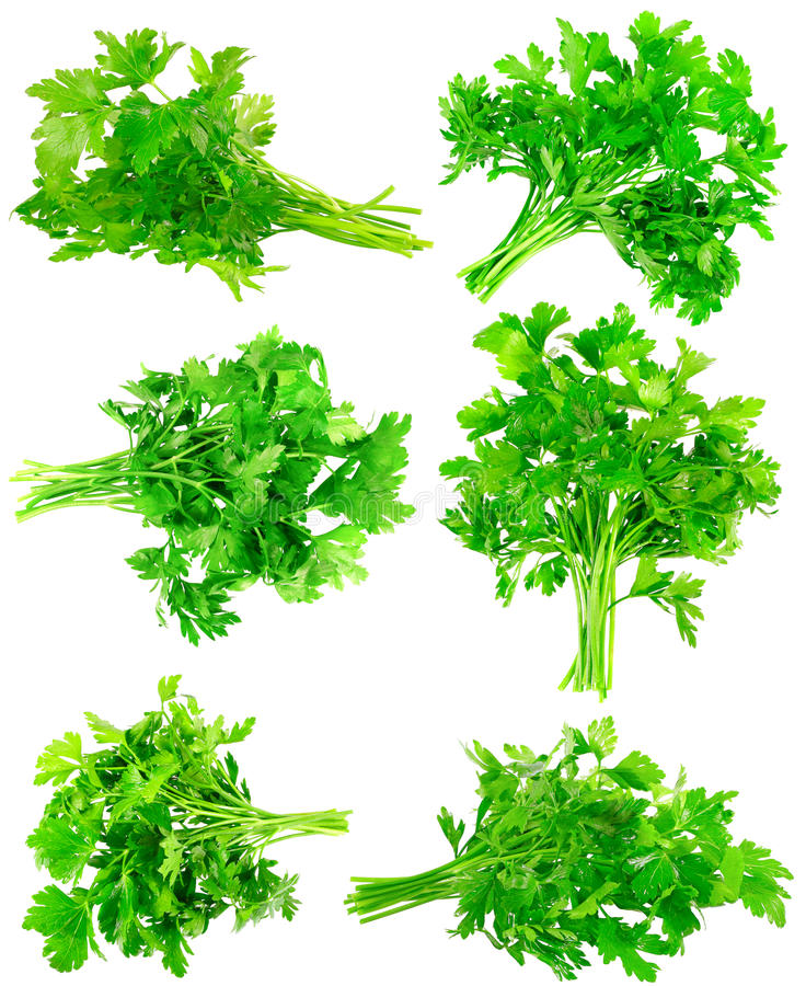 Collage  Of Fresh Parsley On White. Isolated Royalty Free Stock Photography