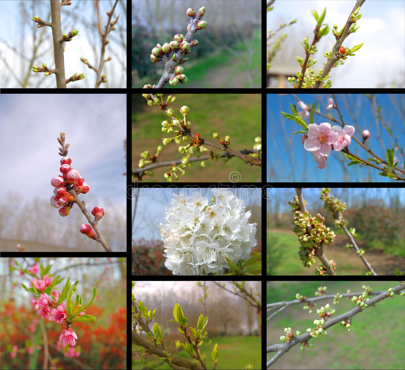 Download Collage with fruit trees stock photo. Image of flowers - 14077850