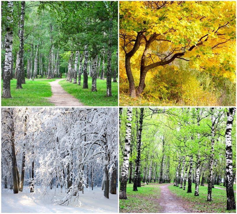 collage fyra säsonger arkivfoton