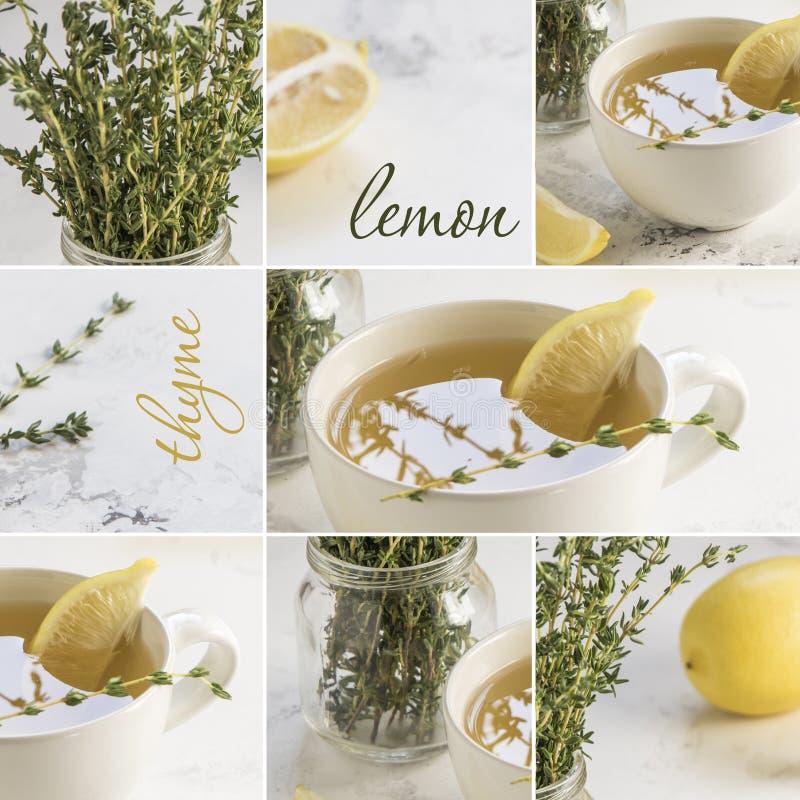 Collage groene thee met verse thyme en citroen stock foto's