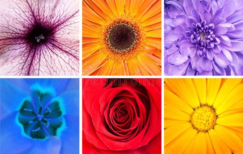 Collage hermoso de las flores - tiros macros foto de archivo libre de regalías