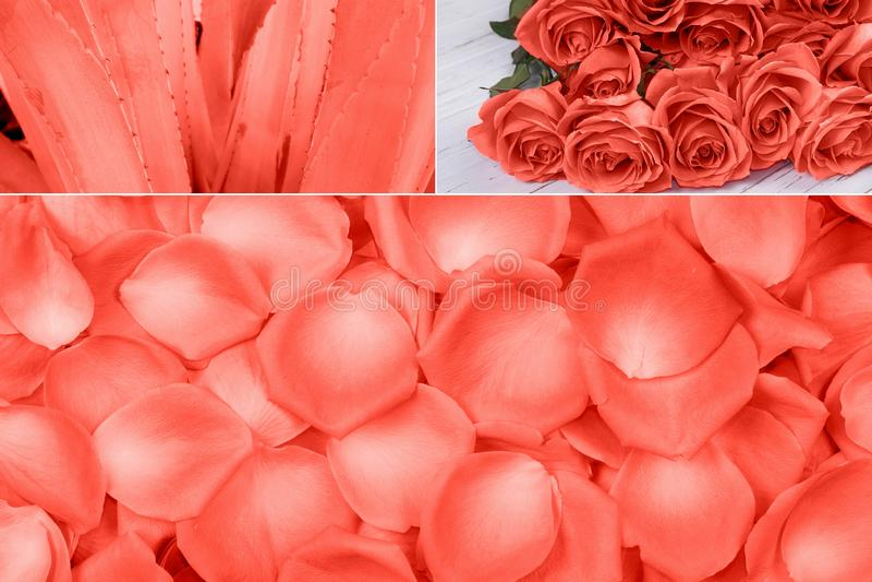 Collage in het Leven Koraalkleur Kleur van het jaar 2019 royalty-vrije stock foto