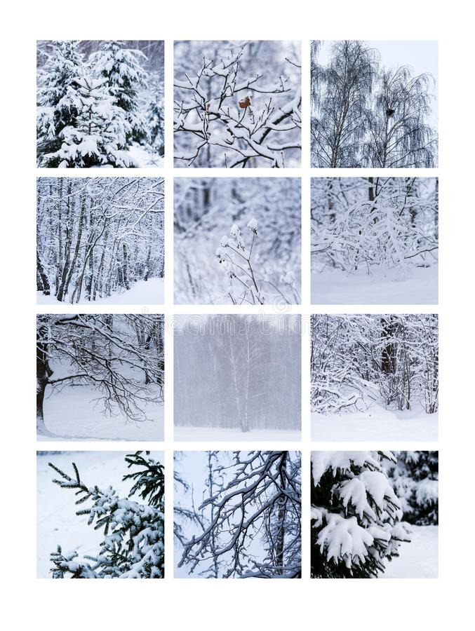 Collage January. Collage of winter nature photos. This #photo can be used for making of a #calendar or as #greeting #card, or a #poster, or a #canvas to # stock images