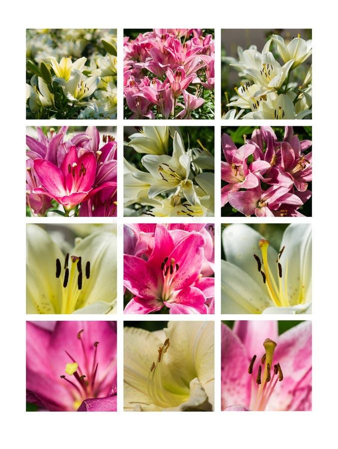 Collage Juli arkivbild