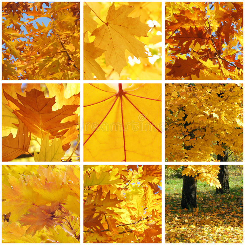 Download Autumnal Collage Stock Images - Image: 30018874