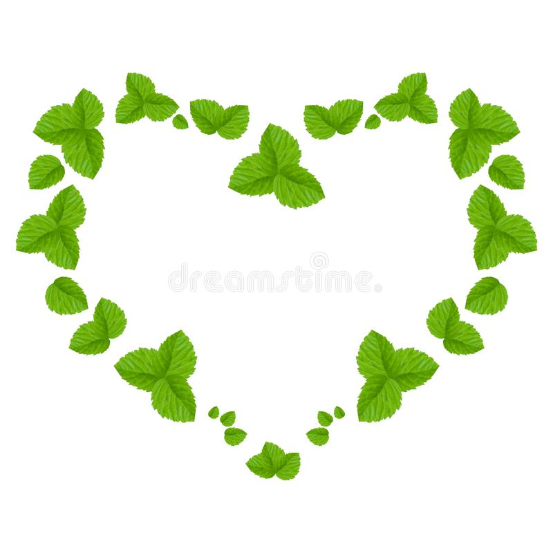 Collage of light green leaves of a raspberry in the shape of heart  on a white background. stock photos