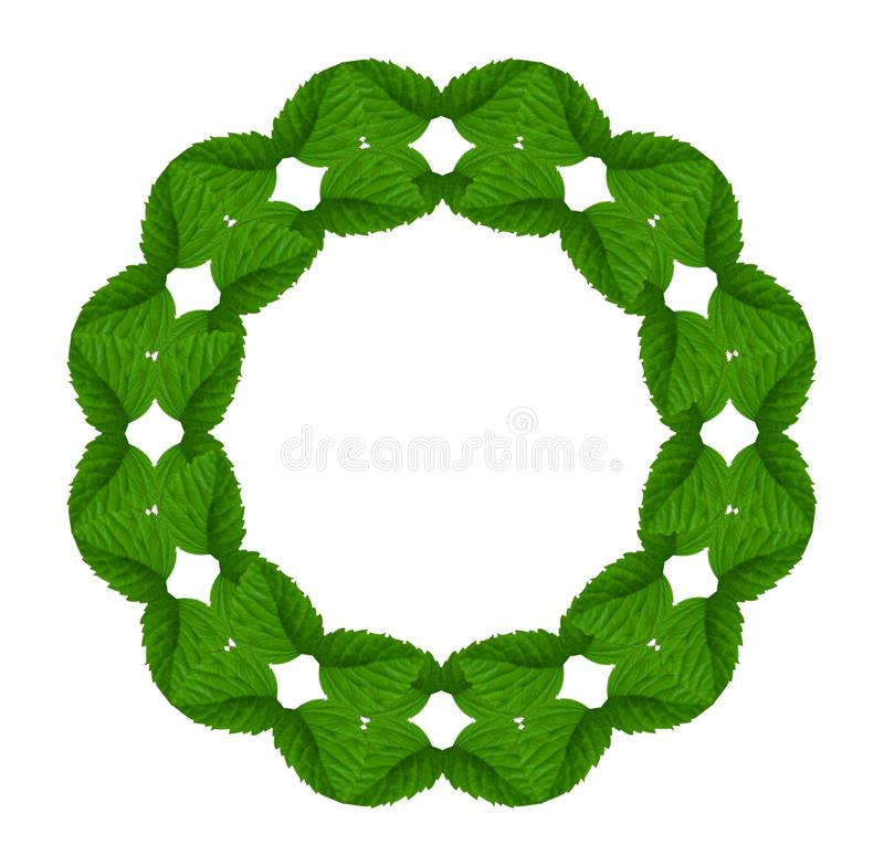 Collage of light green leaves of a raspberry in the shape of wreath on a white background. stock photos